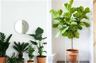 多一分绿色,家里舒适更健康