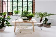 绿植,家里最好的软装师
