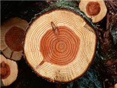 挑选木材的窍门你知道多少