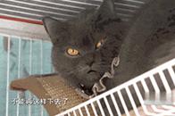 【就匠变新家】18㎡卧室+阳台大改造,铲屎官的吸猫娱乐两不误!