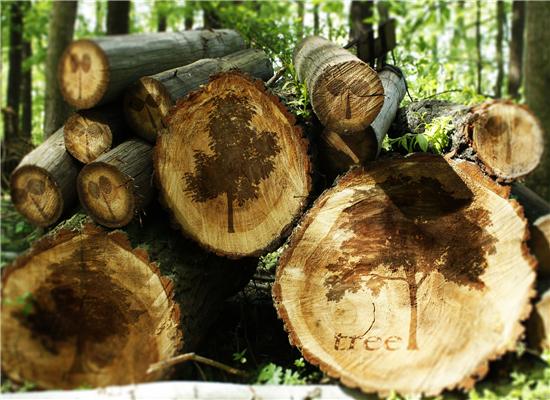 2019年全国林业产业总产值7.56万亿元,2020年目标8.1万亿元