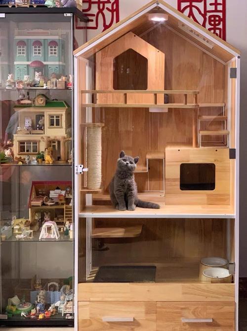 """DOMEO豆喵:这对年轻的清华情侣,给流浪猫造了个""""猫别墅"""""""