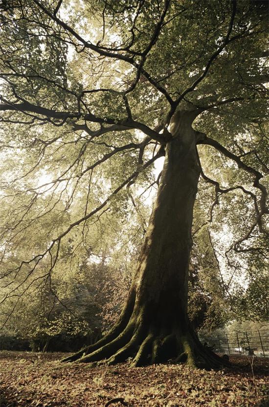 千百年来,为何人们一直钟爱法国橡木?
