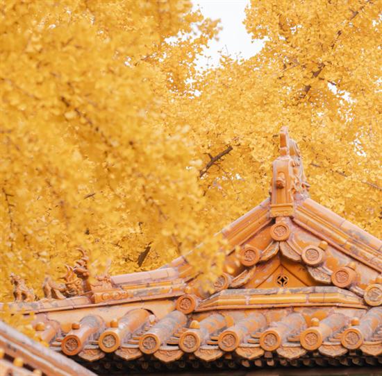 初秋最美木色   有了天格地板,家里也能安排上!