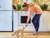 宠物小家电市场悄然走热,美的小米加大投入