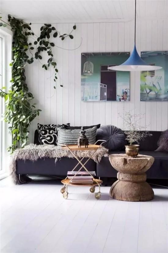 客厅里植物花卉要这么摆,太漂亮了