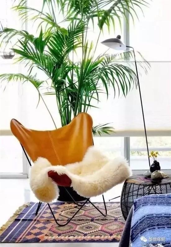 卧室绿植营造清新空间!让你心情舒适