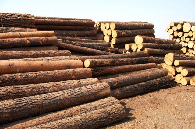 家居市场扩大 带动木材消耗