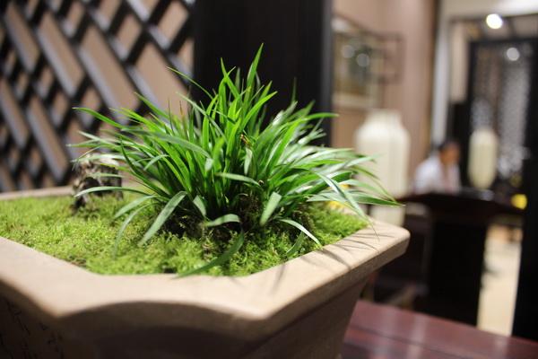 绿植生生不息,赋予了红木展厅生命力