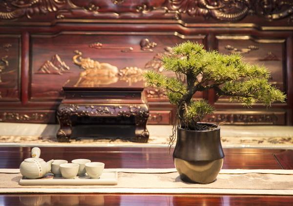 客厅的茶几上摆放横式盆景,颇有端庄大气之感(沁园居供图)