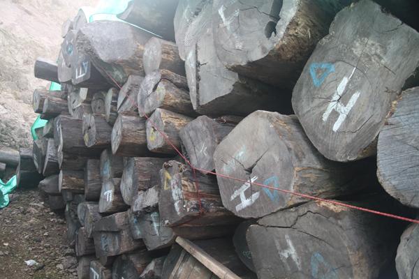 古森红木在印度尼西亚有自己的阔叶黄檀原材供应基地.jpg