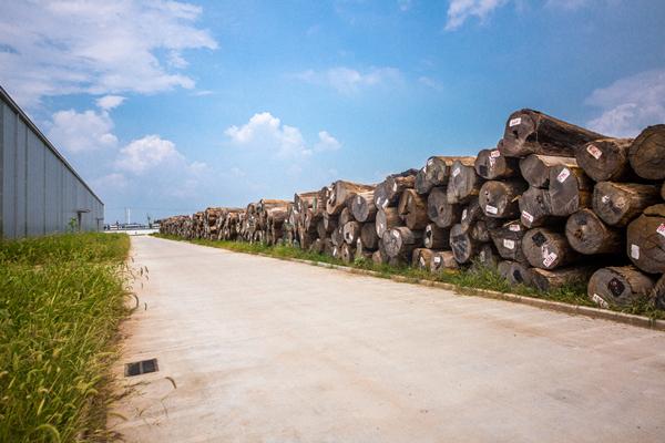 国寿红木堆积如山的大果紫檀原料.jpg