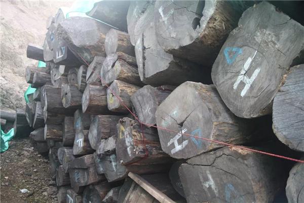 古森红木在阔叶黄檀原产地印度尼西亚的木材供应基地.jpg