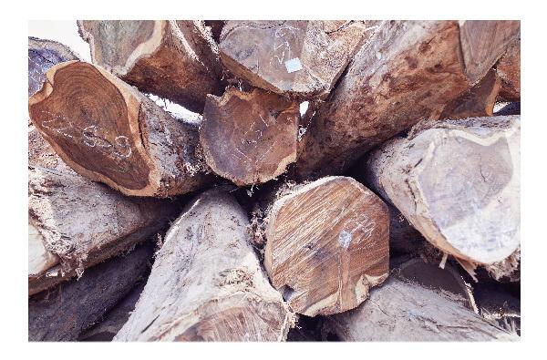 闲适红木五吨木头优选一吨,保证每块家具用材都材色悦目