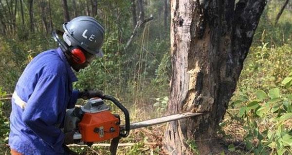 红木价格上涨有着结构性的原因,即资源受到严重约束(图片来源安通社)